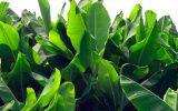 exotic-bushes
