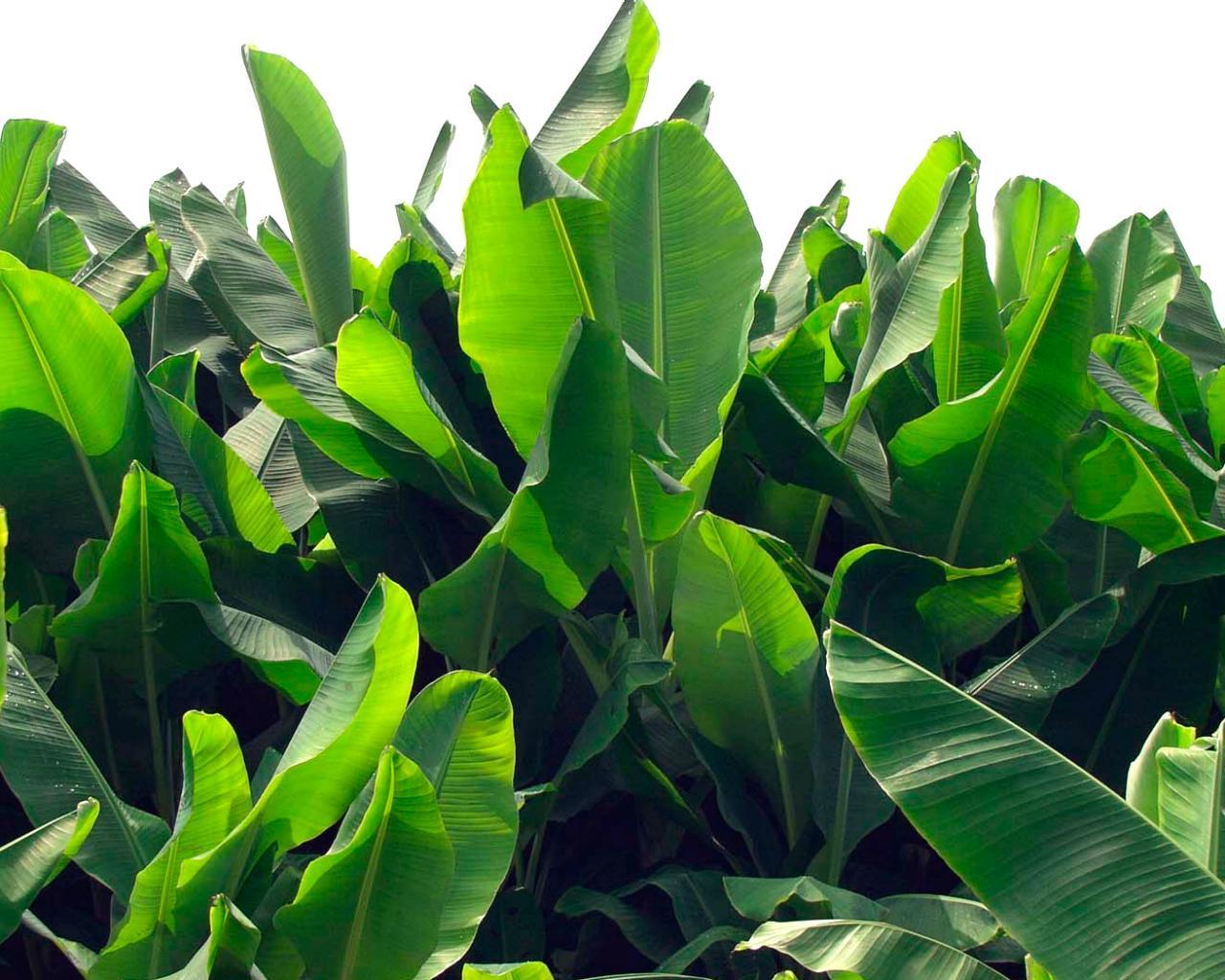 exotic bushes