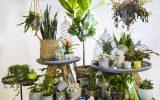 exotic-indoor-plant