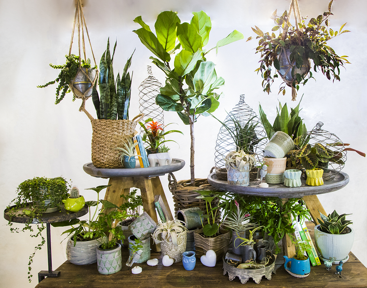 exotic indoor plant