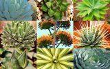 extoic-plants
