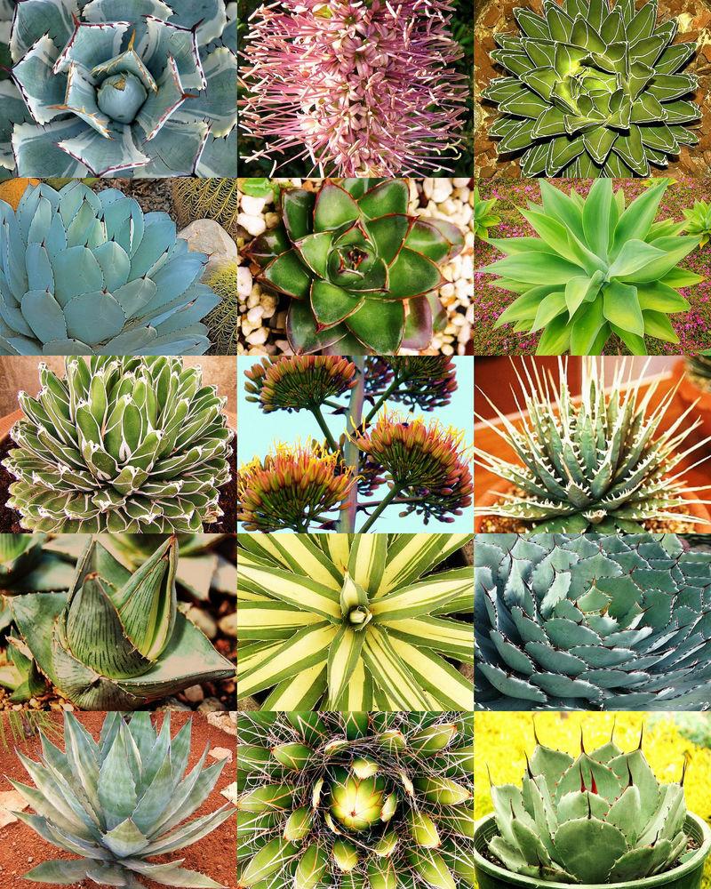 extoic plants