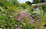 flower-garden-images