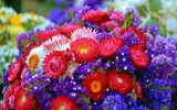 flowering-plants-picture