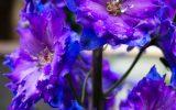 flowers-zone-9