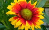 flowring-plants