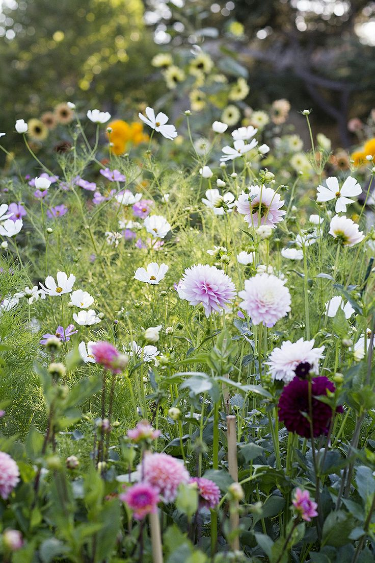garden flowers images
