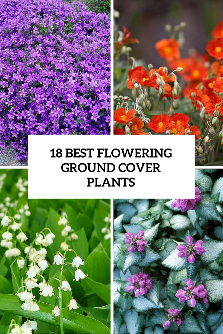 ground coverage plants