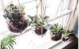 hanging-succulent-plants