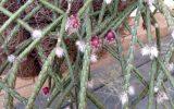 hanging-succulents-plants