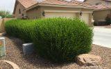 hedge-garden