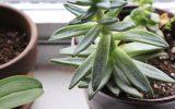 home-succulents