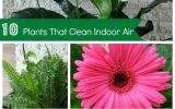 house-plants-clean-air