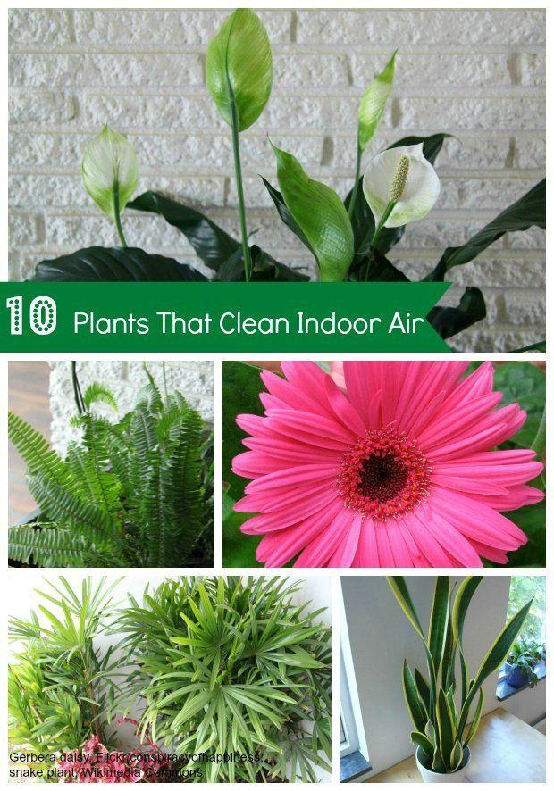 house plants clean air