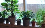 house-plants-that-clean-the-air