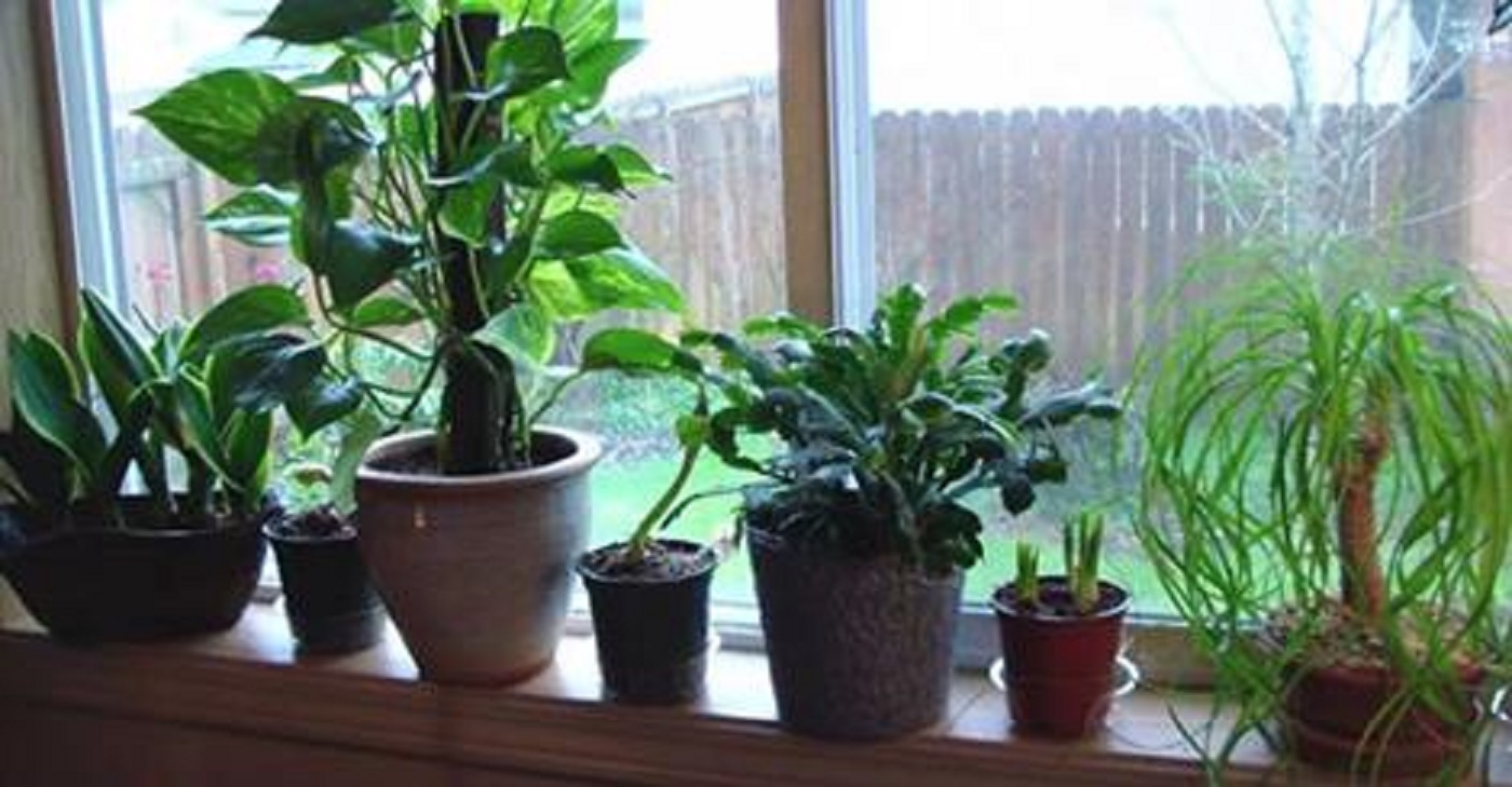 house plants that clean the air