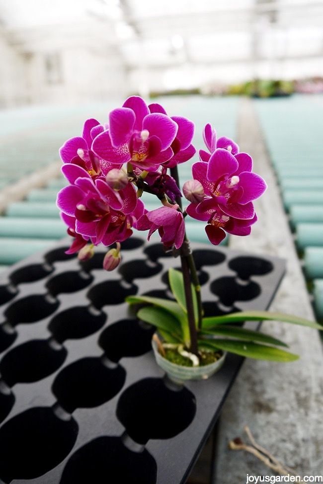 how to care for indoor orchids