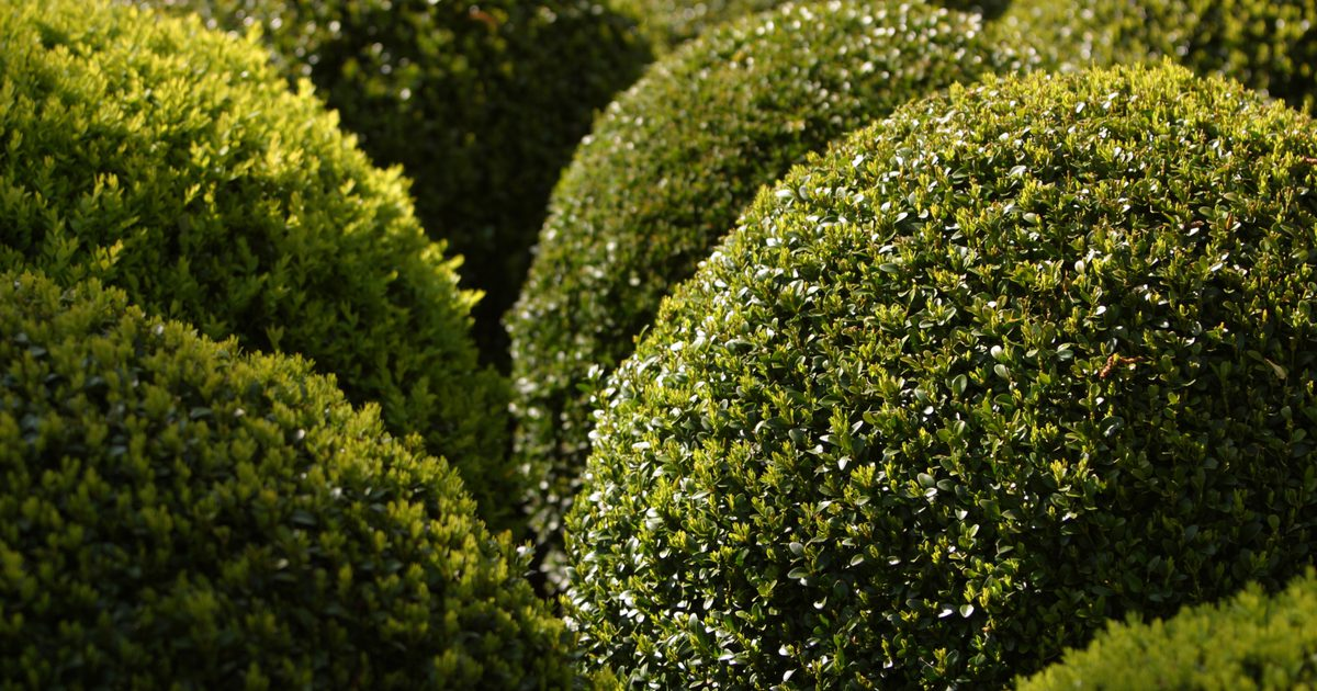 how to make a hedge