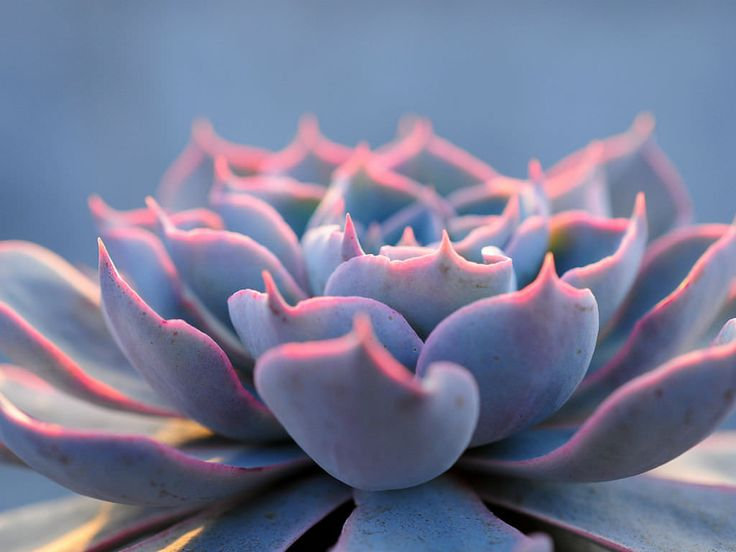 how to make succulents grow fast