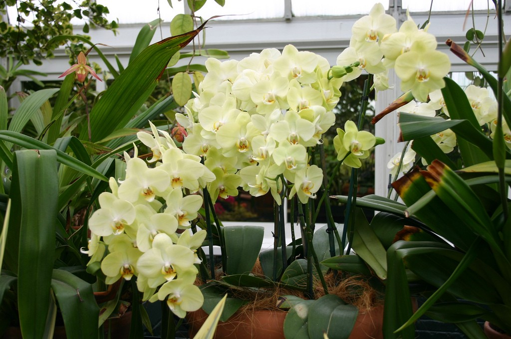 how to take care of orchid flowers
