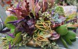 images-of-succulent