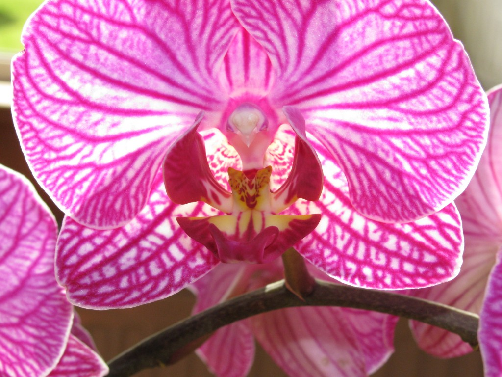 indoor orchid care for beginners