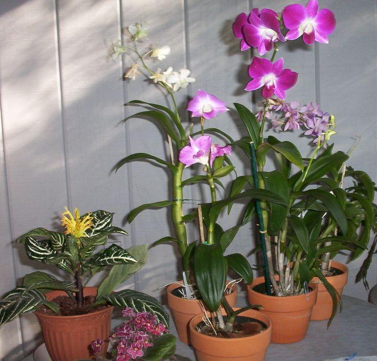 indoor orchid garden