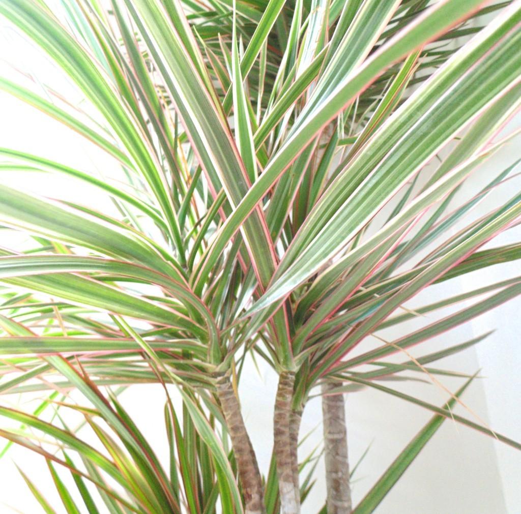 indoor plant benefits