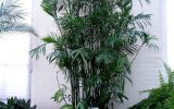 indoor-plants-to-clean-air