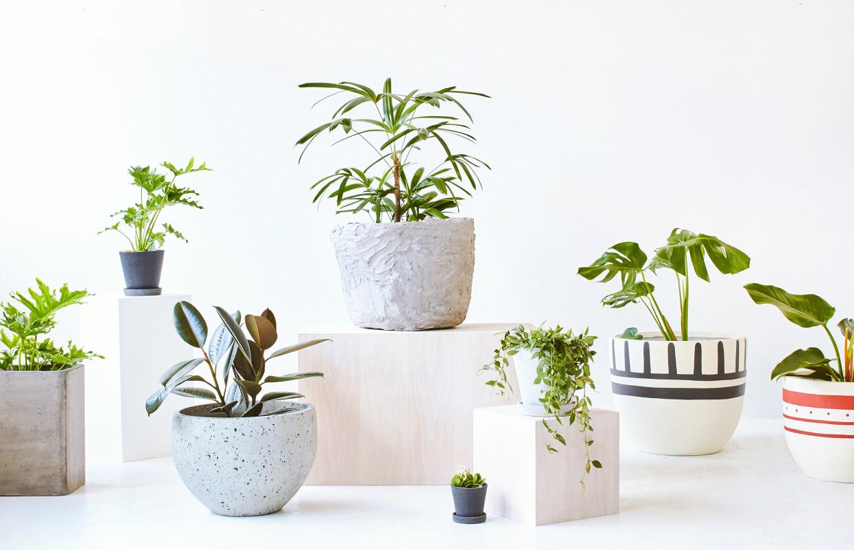 indoors flowers
