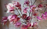 japenese-magnolia