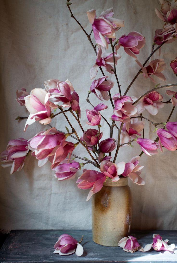 japenese magnolia