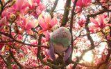 magnolia-jane
