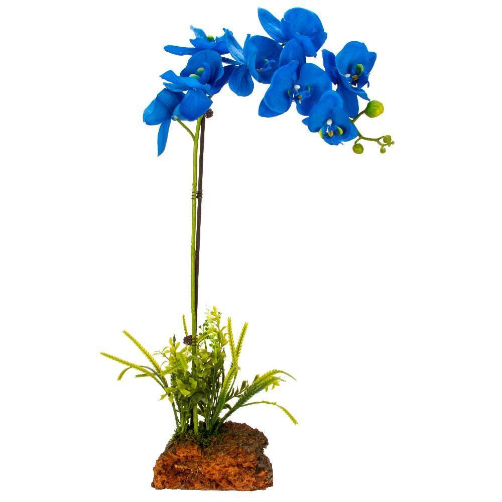 mini orchids home depot
