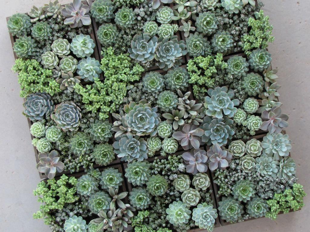 mini succulent care