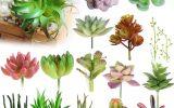 miniature-succulent-plants
