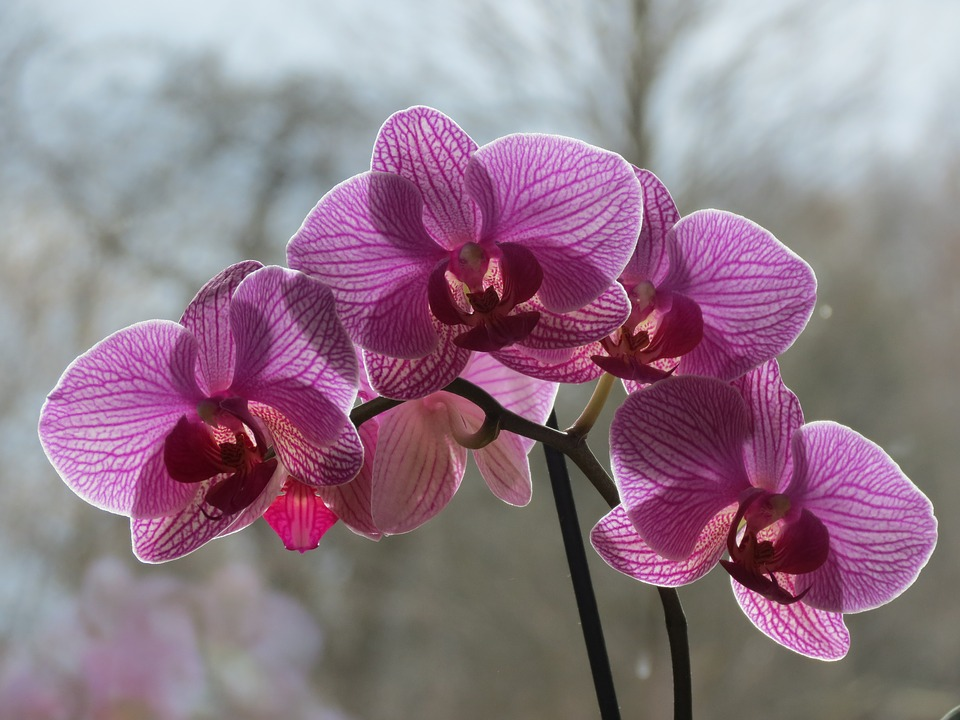 orchid care in winter