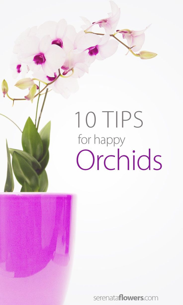 orchid how to take care