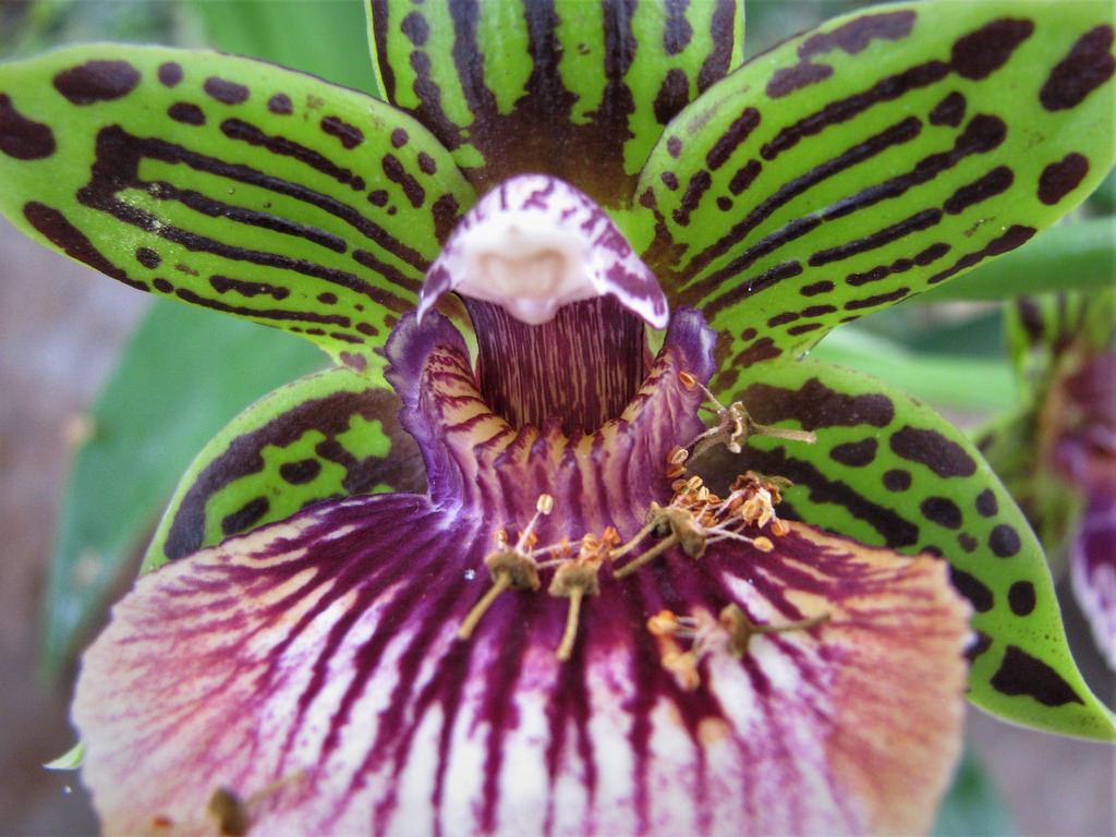 orchid indoor