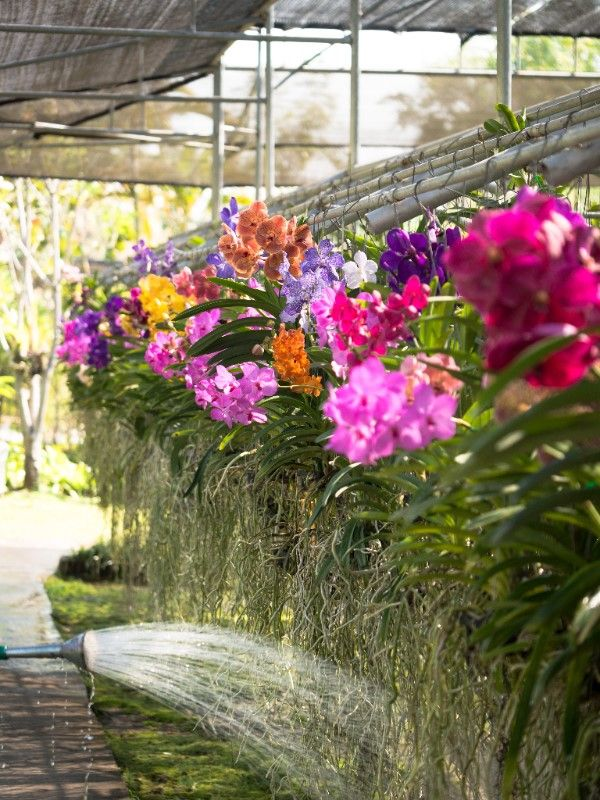 orchids care and maintenance