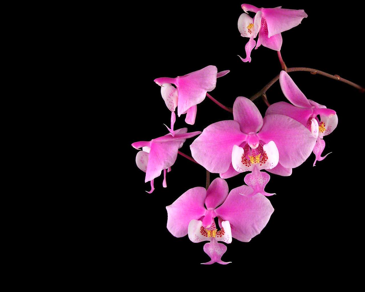 orchids images