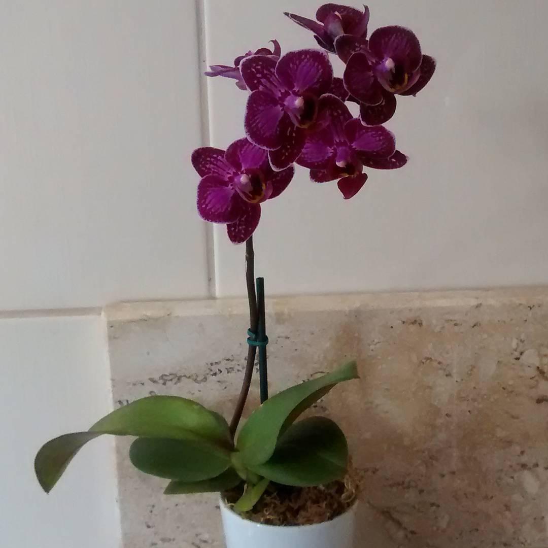orchids indoor