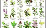 ornamental-flowers-with-names-and-pictures