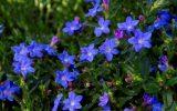 perennial-flowering-plants