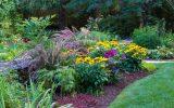 perennial-flowers