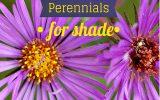 perennials-that-like-shade