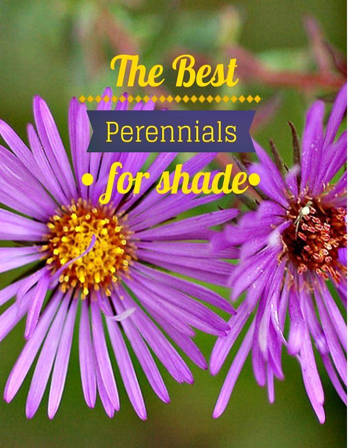 perennials that like shade
