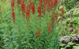 pic-of-flowering-plants
