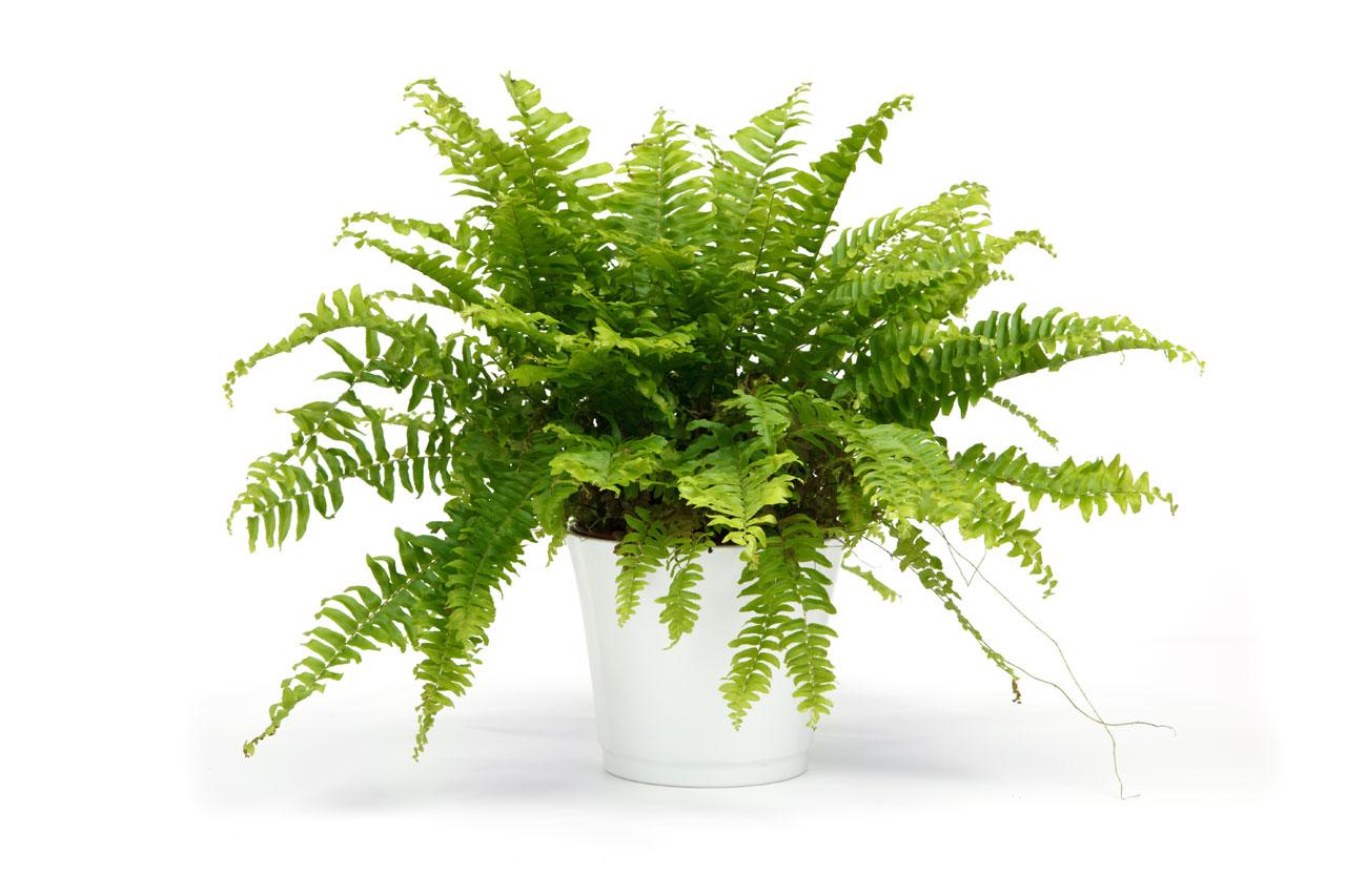 plant that clean the air