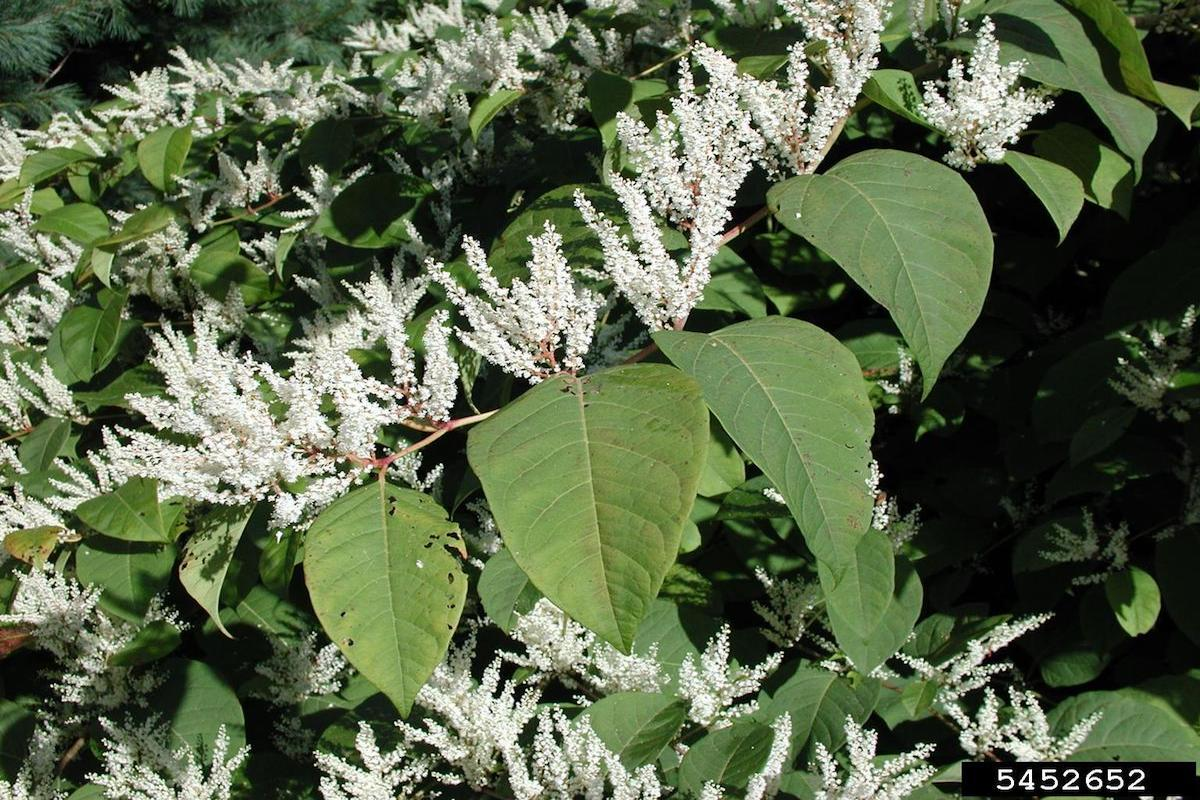 plants in pennsylvania